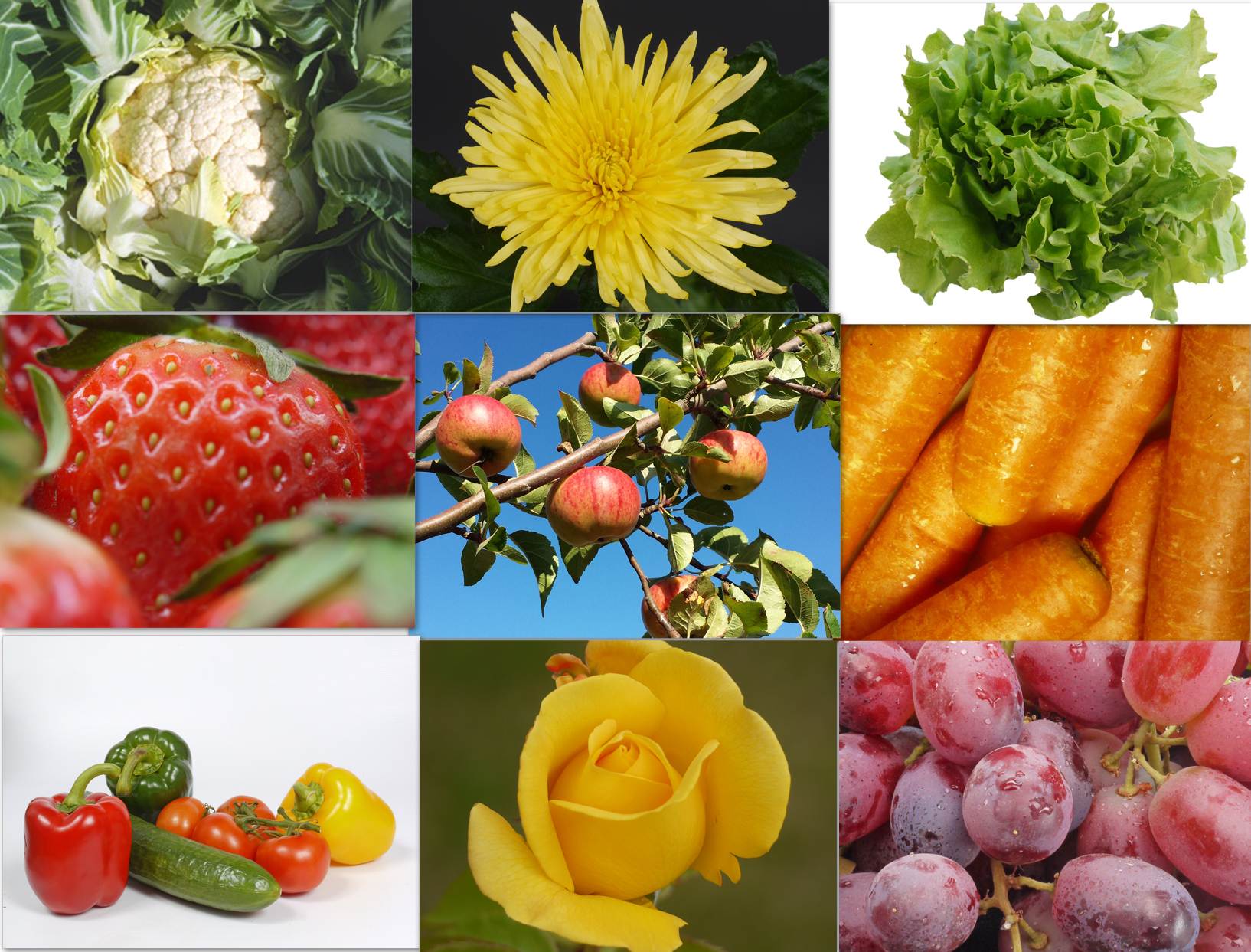 collage fruit veg flowers.jpg